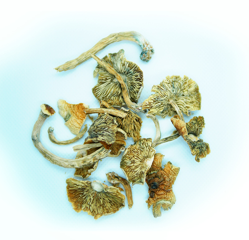 Raw Mushroom Close Up