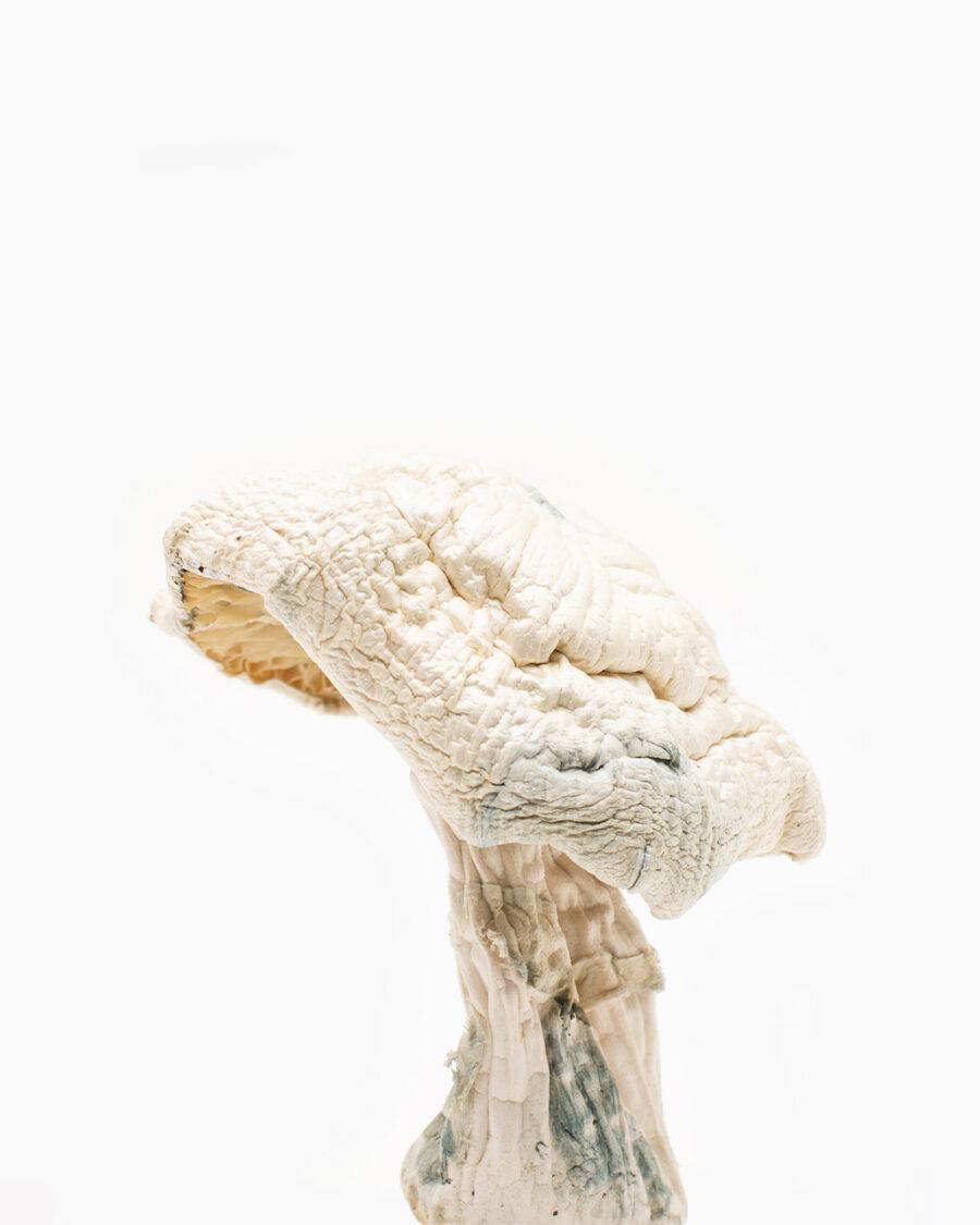 Avery's Albino Magic Mushrooms